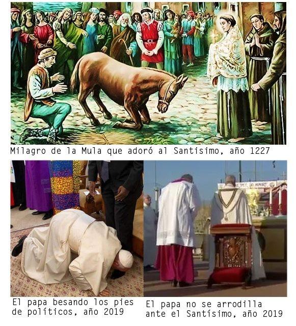 donkey-kneeling